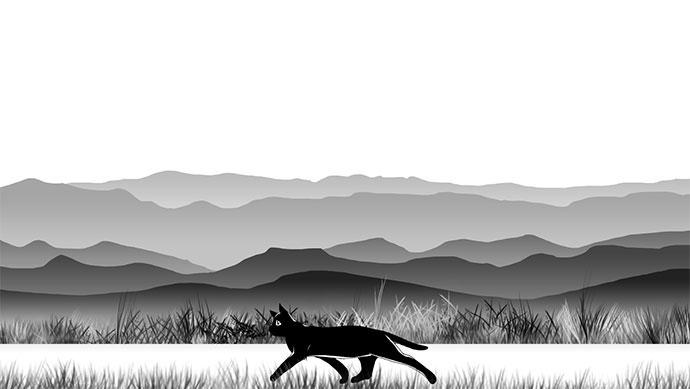 21 великолепный эффект анимации бекграунда (фона) сайта